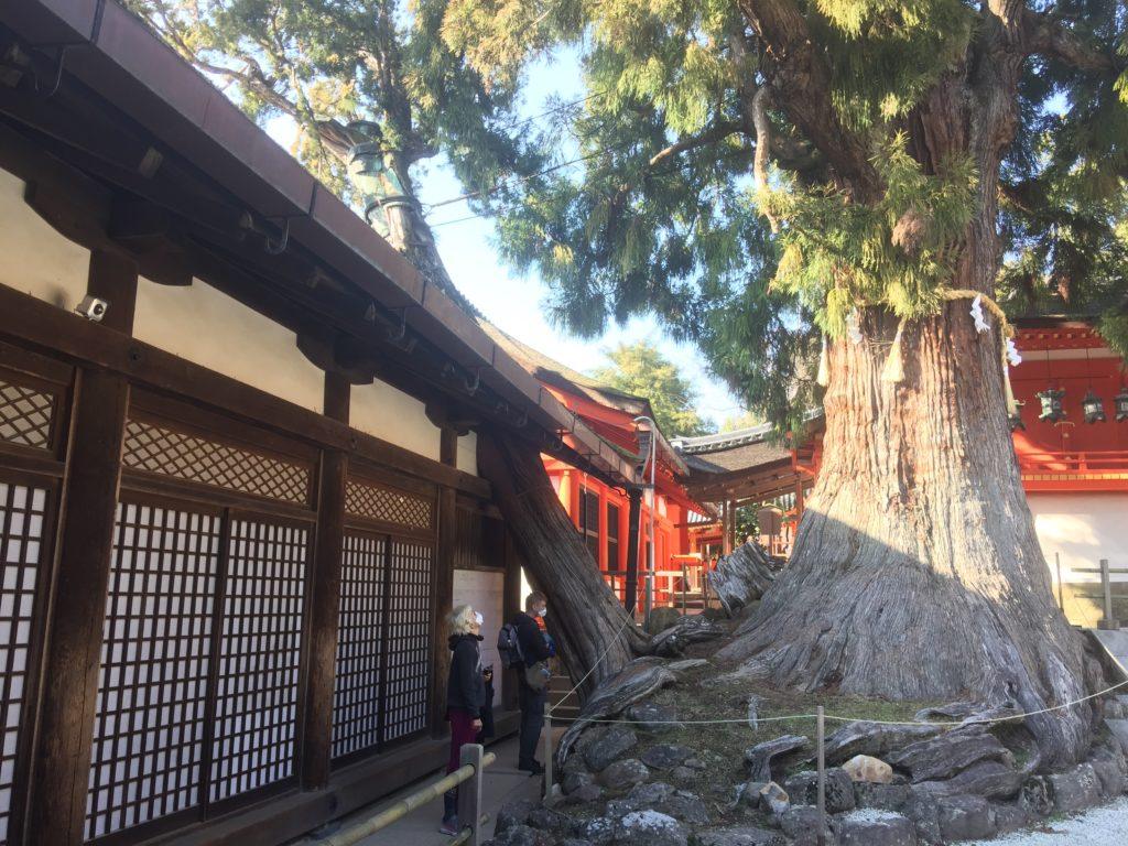Le grand sanctuaire Kasuga Taisha